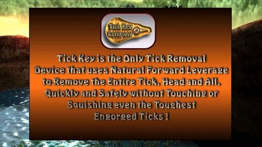 3 Pack Tick Key Tick Removal Tool For Dogs Pets Humans And Kids